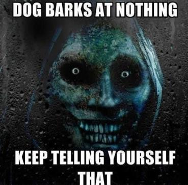 Dogs-bark-at-nothing
